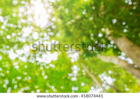 blur green tree  in   forest background  with sunlight
