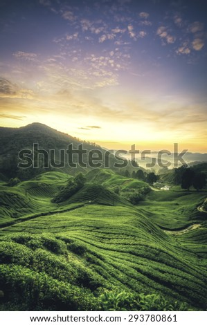 blur image the beauty  of morning view at tea plantation during sunset sunrise. wave contour and surrounded by hill