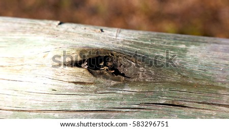 blur in  south africa   abstract wood closeup like background texture