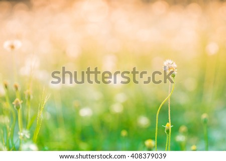 blur Natural flower outdoors bokeh background in green and yellow tones - stock photo