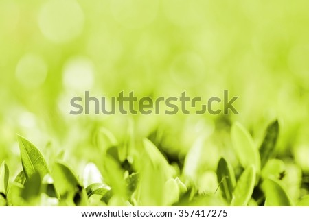 Blur natural green beautiful background and texture./Blurred soft green foliage nature beautiful background and texture . - stock photo