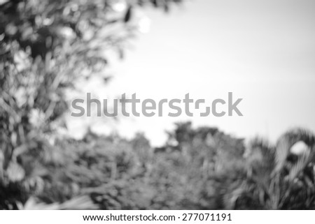 blur nature background in black and white - stock photo