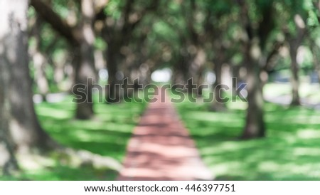 Blur oaks tree tunnel with bokeh. Romantic archway made from live oak trees, green grass and rustic brick path leads to infinity. Urban tranquil scene abstract background. Panorama style. - stock photo