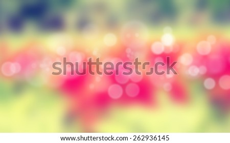Blur pictures of flowers with bokeh effect - stock photo