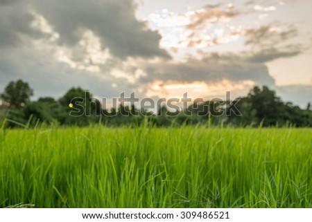 Blur scene of field during sunset - stock photo