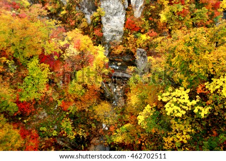 Blur short of Naruko Gorge International Park with colorful autumn leaf in Japan