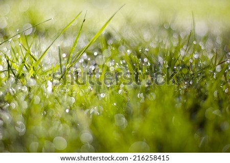 blur summer time dewy grass background - stock photo