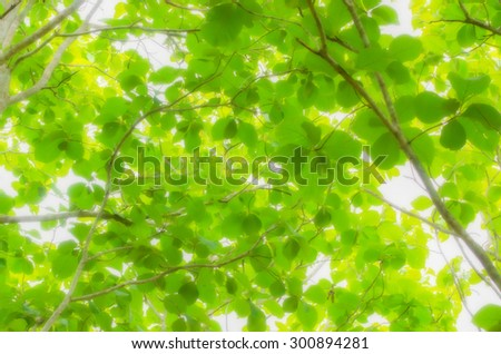 blur tree leaf background