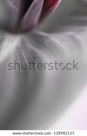 Blured flower background - stock photo