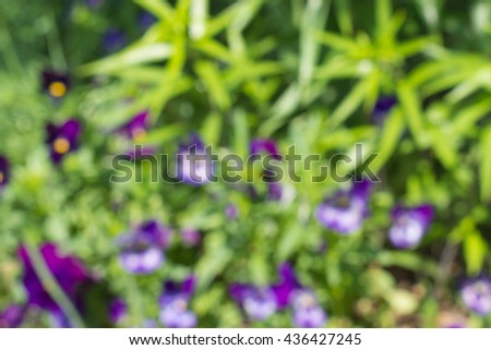 Blured photo of young bush branches with little fresh green leaves and violet flowers in sun shine garden outdoors - stock photo