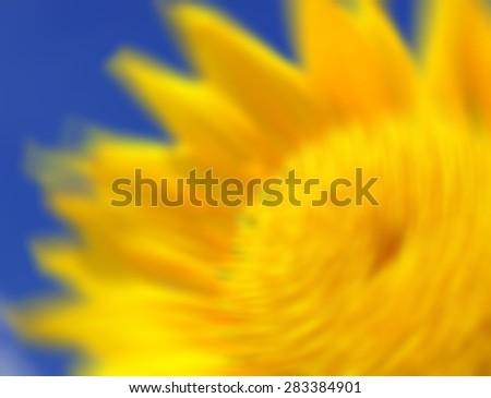blured sunflowers - stock photo