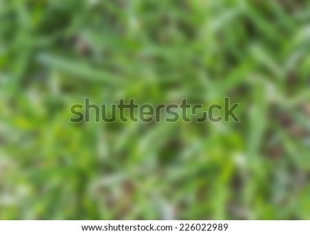 Blurred  - stock photo