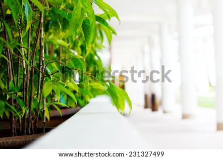 Blurred abstract image of white hotel lobby with green hedge - stock photo