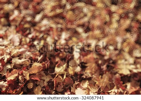blurred background autumn leaves yellow trees