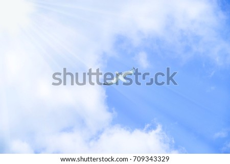 Blurred background heaven and freedom concept. Seagulls bird flies gracefully in blue sky with light streaming through. Make sense to the faith from God. Holy spirit bird on blue background.