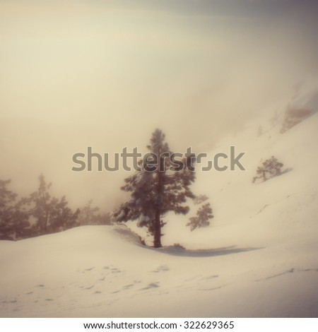blurred background, landscape of pine trees in the mountains during a snowfall