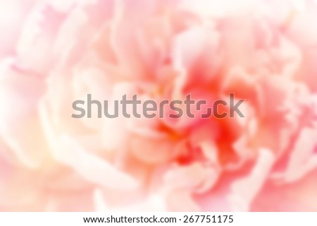Blurred background of a pink peony closeup - stock photo