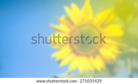Blurred background of beautiful sunflower against blue sky with copy space - stock photo