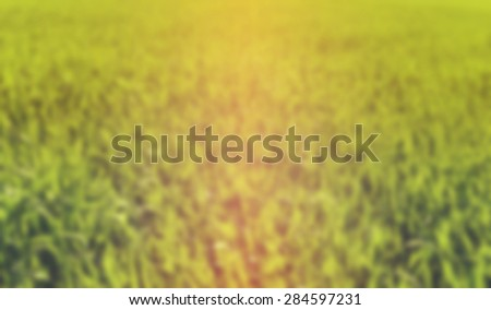 Blurred background of fresh grass in summer colours - stock photo