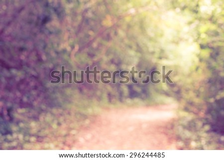 Blurred background : Walking trail in lush green tropical forest. Beautiful autumn morning in the forest. Way in deep forest. Dark forest and a road. Vintage retro effect style pictures. - stock photo