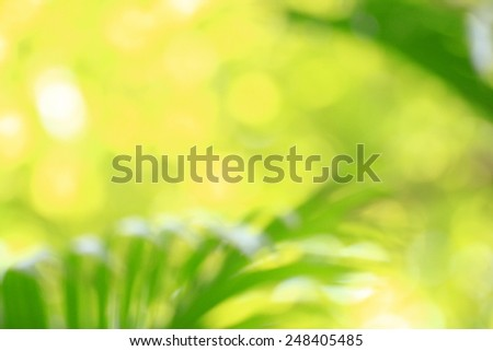 blurred background with natural bokeh and bright green  light