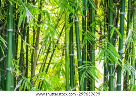 Blurred bamboo forest background with glow light background - stock photo