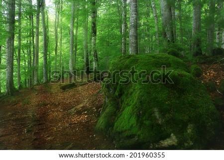 blurred dense forest landscape - stock photo