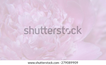 Blurred floral (peony) background