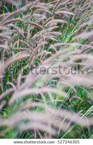 Blurred flowers grass in the evening