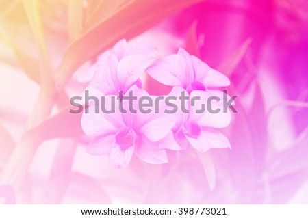 blurred flowers with color effect