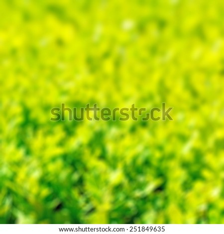 Blurred fresh green grass as background - stock photo