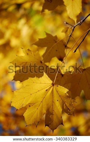 Blurred golden autumn park leaves