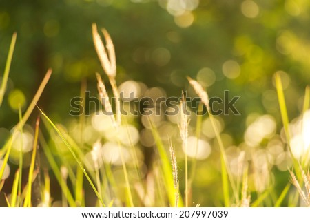blurred green grass with nature bokeh