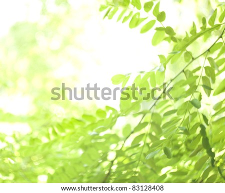 Blurred green leaves background - Spring, summer time - stock photo