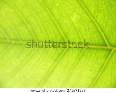 Blurred green leaves texture - stock photo