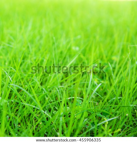 Blurred Growth Green Grass in Sunny Day closeup Outdoors, overgrown grass.