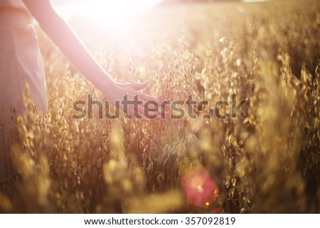 Blurred hand touching wheat spikes with her hand at sunset  - stock photo