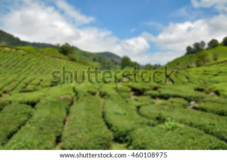 blurred image background of  Cameron Highland tea plantation at sunny day with cloudy and blue sky - stock photo