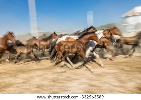 Blurred image of a horse in motion. Herd runs. - stock photo