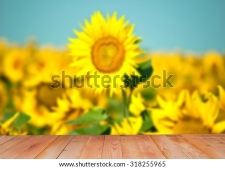 Blurred image of beautiful sunflowers, wooden background - stock photo