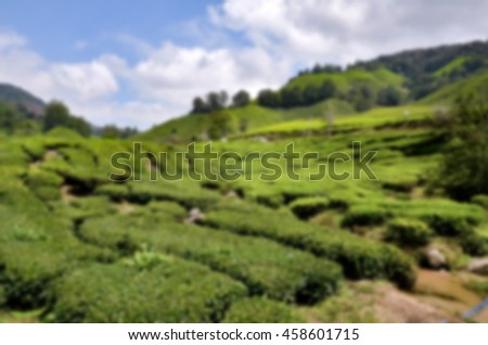 blurred image of Cameron Highland tea plantation located in Malaysia at sunny day with cloudy and blue sky - stock photo