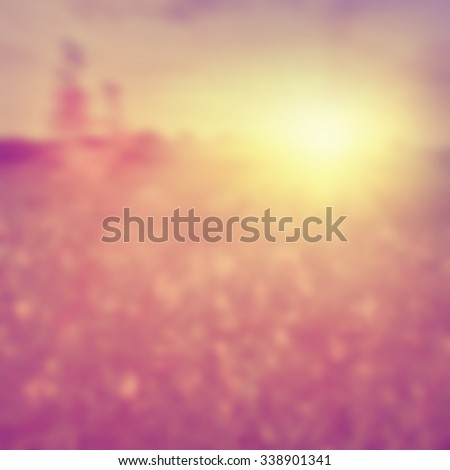 Blurred image of summer field at sunset.  - stock photo