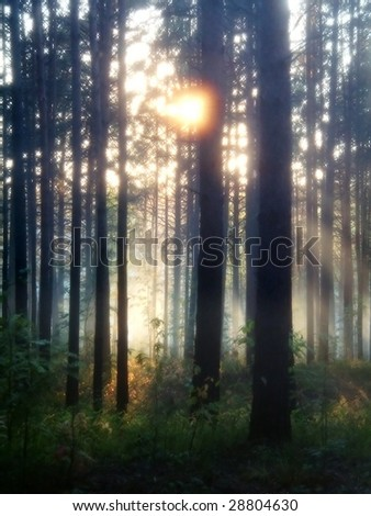blurred mystery forest - stock photo