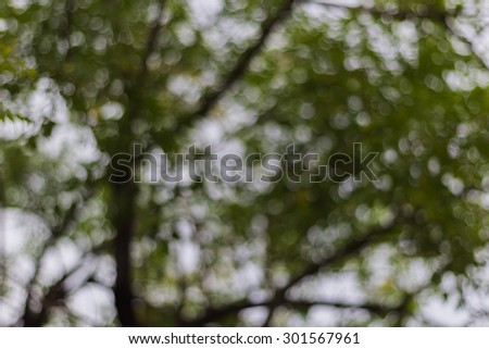 blurred Natural green bright blur background  - stock photo