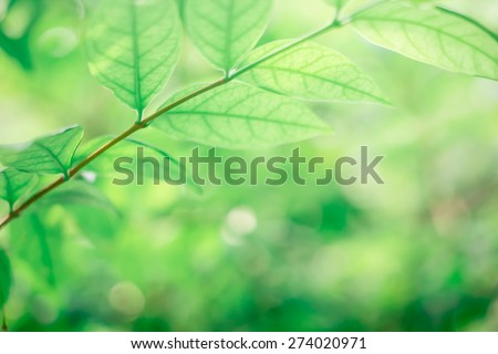 Blurred nature background:blurry of organic greenery leaves plantation in the forest backdrop:blur of green color natural park environment concept:spring and summer concept.fertile and jungle and wild - stock photo