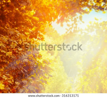 Blurred nature background with beautiful sunny autumn foliage in park - stock photo