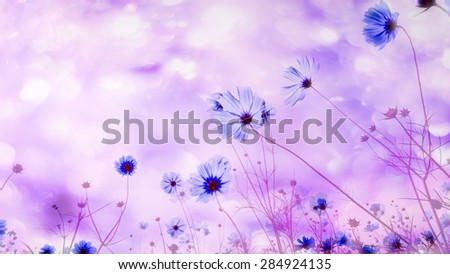 Blurred of abstract. Sweet color cosmos flowers in bokeh texture soft blur for background with pastel vintage retro style. - stock photo