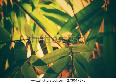 Blurred of bamboo - stock photo