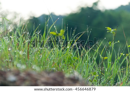 blurred of drops of dew on a green grass - stock photo