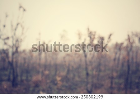 Blurred of forest after a bushfire - stock photo